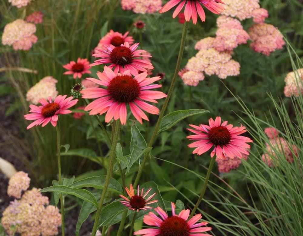 Deze foto is gemaakt in De Tuinen van Appeltern